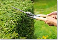 Cắt cỏ chăm sóc khuôn viên